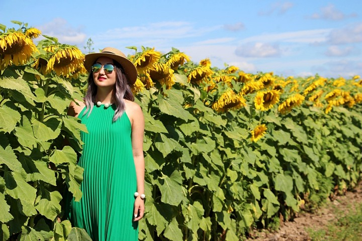 bogle-seeds-sunflower-field-toronto-ontario-10